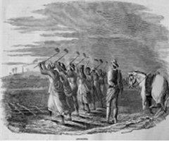 Culture de la canne à sucre, Antilles anglaises, 1840