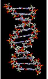 L'ADN est le support de l'hérédité